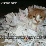 funny cpa cat